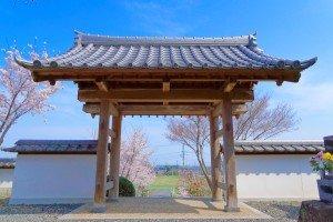 宗清寺山門 綺麗な青空と桜が満開